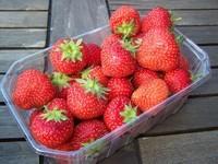 PW Profesjonal Sp. z o.o. - chłodnia Adamów - producent mrożonek owocowych i warzywnych, oraz owoców schładzanych i przecierów